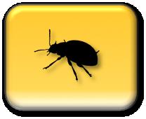 Make a Bug Report